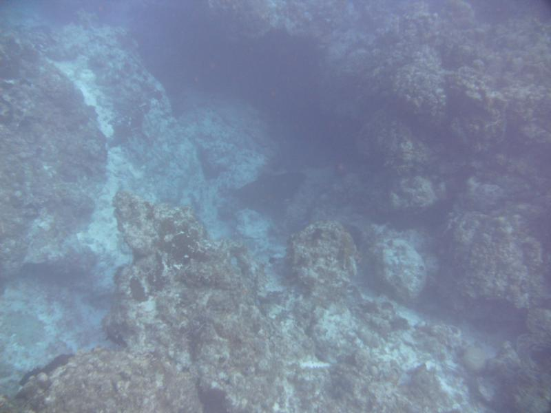 can you see him he's there, Eagle Ray of course at end of dive!