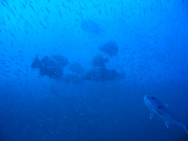 Lots of Goliath Grouper at the Mexican