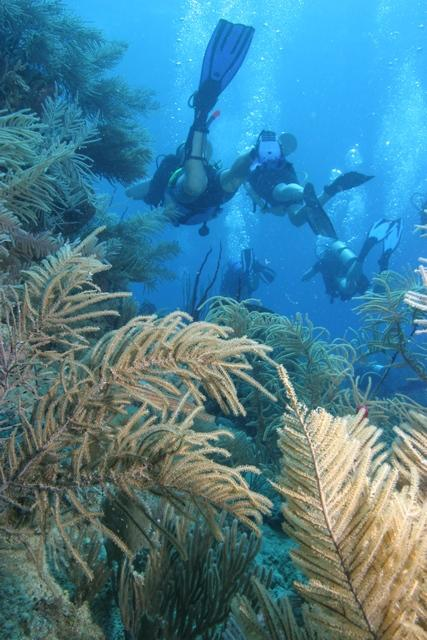 Roatan reefs in Honduras