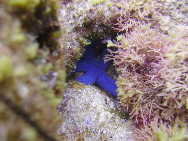 Blue Starfish Guam