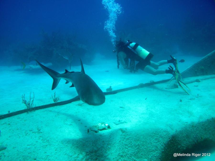 Diving w/Sharks