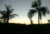 SanDiego Palms