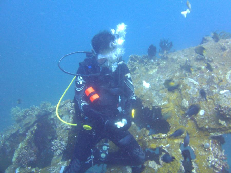 feeding fish at Pillbox Wreck