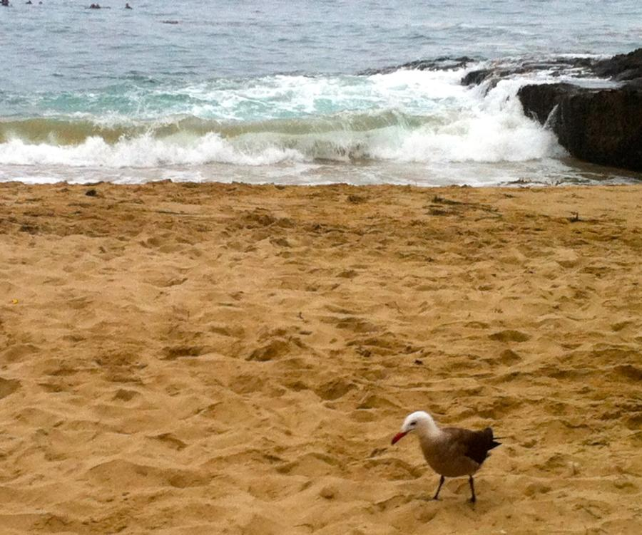 Divers Cove 7.11.12 Seagull