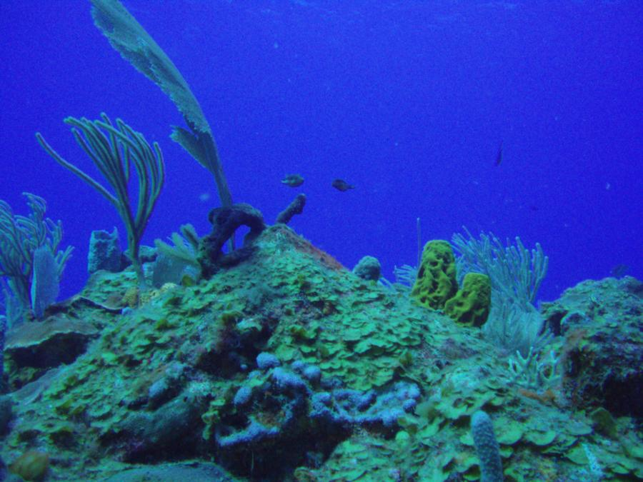 Diving in Ponce PR