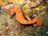 Seahorse - Cabo San Lucas