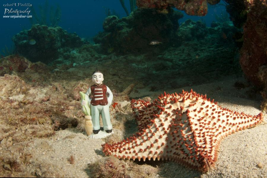 Sea Star and the Japanese