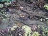 Cute little white spotted boxfish - jdhallchgo