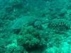 Turtle near Black Rock Dive Site, Oahu