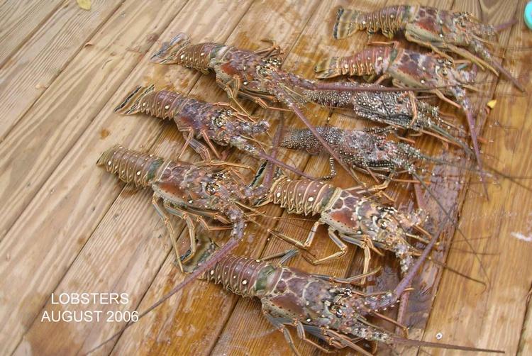 Lobsters 2006