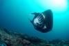 Big mantas at Matava, Fiji
