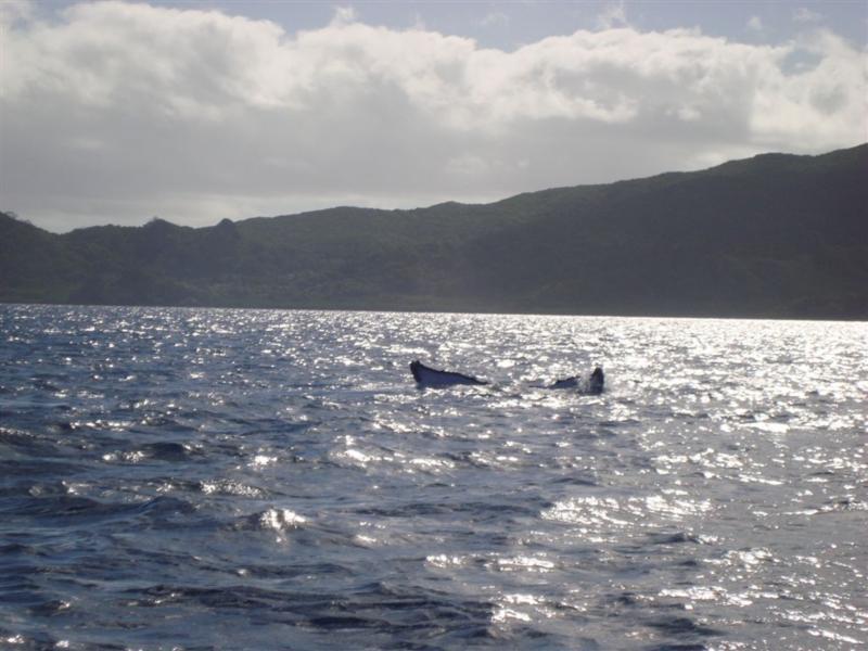 Humpback whales off Matava, Fiji