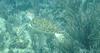 USVI 2008 Whisteling Cay