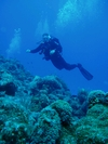 Drift Diving In Cozumel