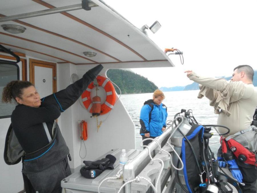 Seward diving