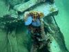 Aruba Pendernales wreck