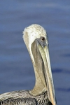 Pelican Keys