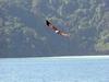 2003 - Sea Dragon MV Andaman - Fish Eagle