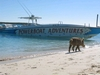 Ship Channel Cay, Bahamas (that`s a wild pig!)