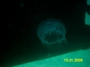 Jelly Fish, Ship Sapona Bahamas, and yes it got me!!