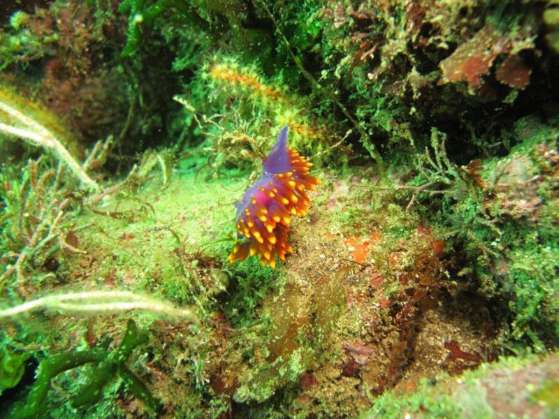 nudibranches everywhere