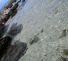 Accidental pic of Shark`s Cove entry point...