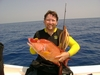 Hogfish, Key Largo, FL