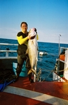 62-Pound Amberjack Dry Tortugas
