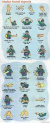 Hand Signals (funny)