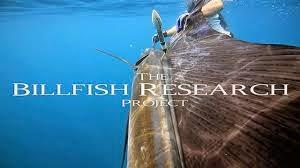 Sailfish Tagging - Scuba Diving in the Blue