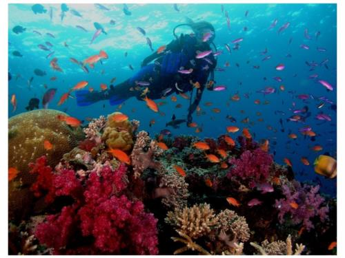 Empirical Research Has Confirmed the Therapeutic Benefits of Scuba Diving