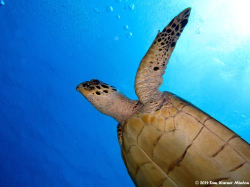 Cozumel diving is out of this world!