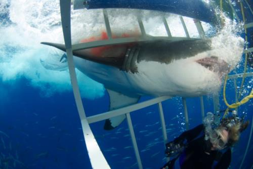 The Day I came face to face with a Great White Shark!