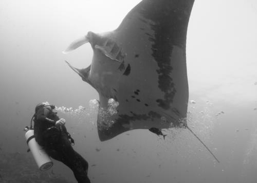 Dive the Revillagigedo Archipelago in Mexico
