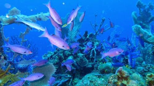 cocoviewresort Roatan island Honduras