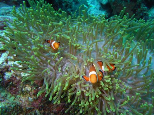 The 7 Best SCUBA Diving Destinations for Beginners!