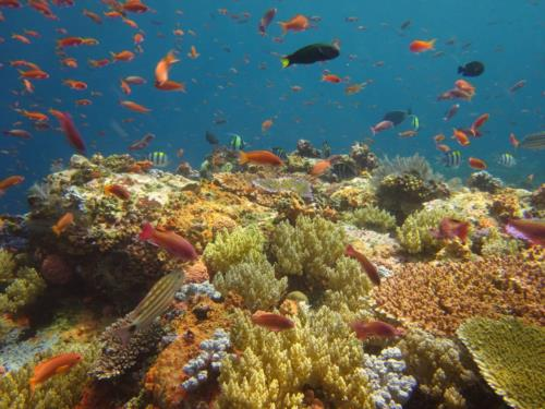 How to compare different dive destinations!