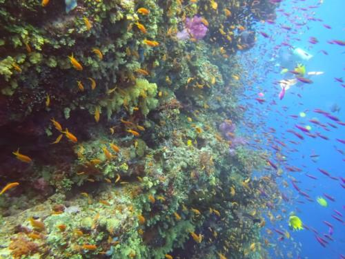 Diving Fiji: The soft coral capital of the world!