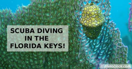 SCUBA Diving in the Florida Keys!