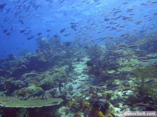 World class diving in Raja Ampat, Papua!