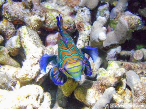 Dive destination: Malapascua, The Philippines!
