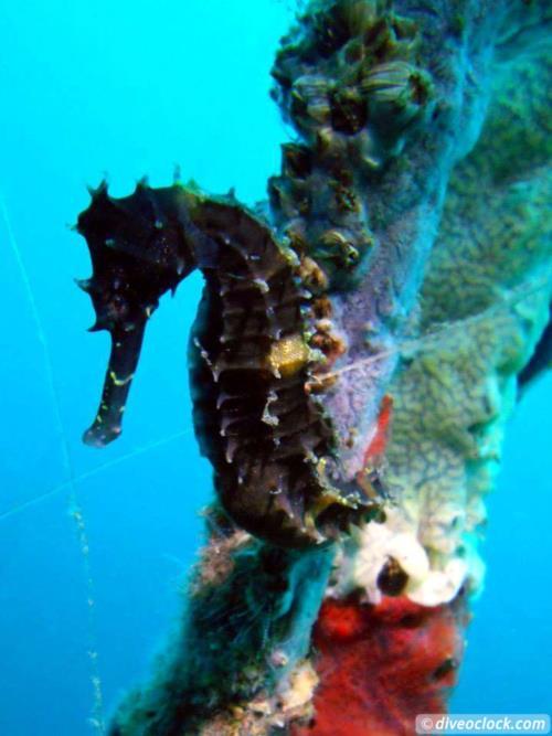 Dive destination: Negros, Dauin & Apo Island, The Philippines!