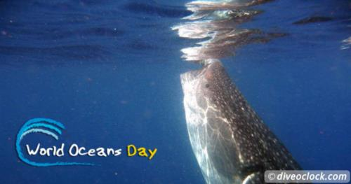 How Far Would You Go to See a Whale Shark in Real Life?