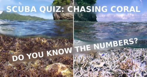 SCUBA QUIZ: Chasing coral!