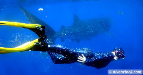 Snorkeling with Whale Sharks around Isla Mujeres, Mexico!