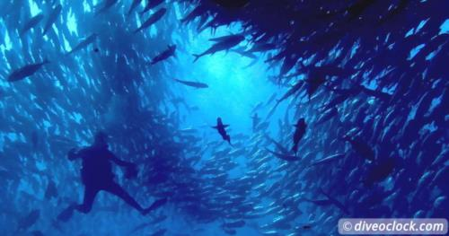 Diving the Jewel of the Sea of Cortez: Cabo Pulmo, Mexico!