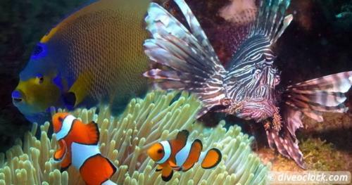 SCUBA QUIZ: The Age of Fish!