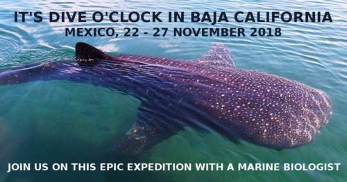 It's Dive o'clock in Baja California, Mexico!