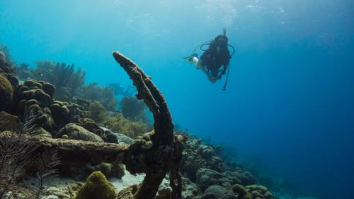 Best Scuba Diving Sites Around Tokyo