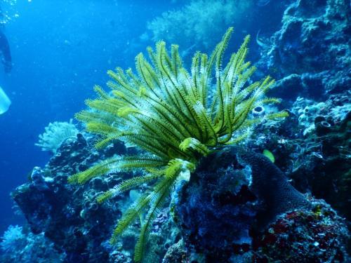 Best Dive Sites in Asia